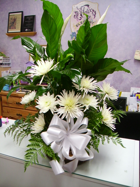 Peace Lilly with spider mum arrangement