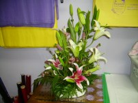 Star Gazier and Oriental Lilies